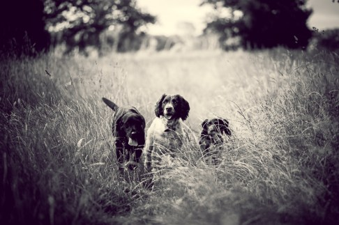 The-Norfolk-Dog-Photographer-0029