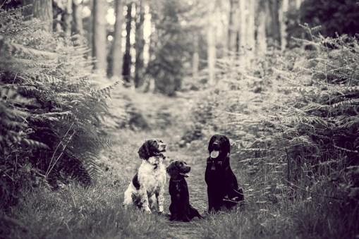 The-Norfolk-Dog-Photographer-0034