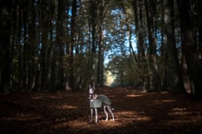 The-Norfolk-Dog-Photographer-0014