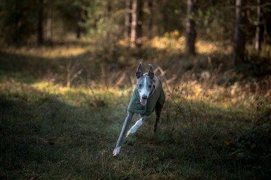 The-Norfolk-Dog-Photographer-0020