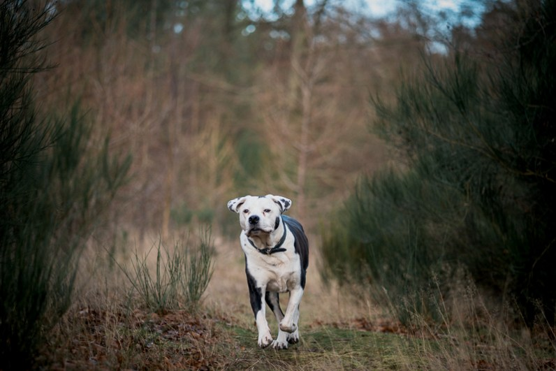 The-Norfolk-Dog-Photographer-0012