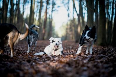 The-Norfolk-Dog-Photographer-0016