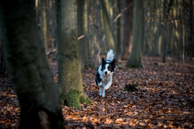 The-Norfolk-Dog-Photographer-0027