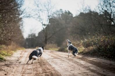 The-Norfolk-Dog-Photographer-0033