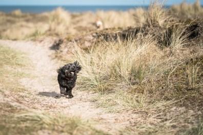 The-Norfolk-Dog-Photographer-0005