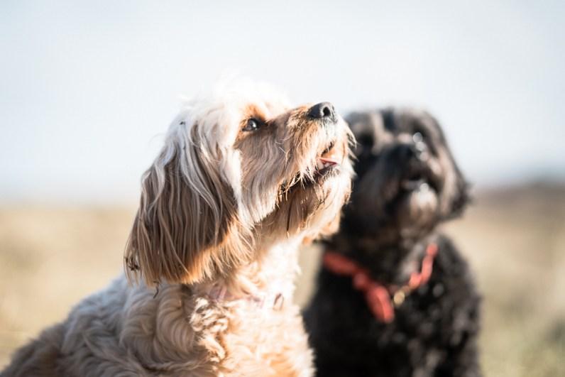 The-Norfolk-Dog-Photographer-0009