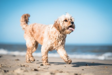 The-Norfolk-Dog-Photographer-0036
