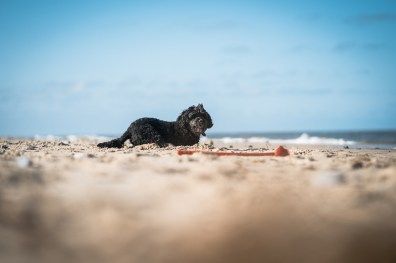 The-Norfolk-Dog-Photographer-0037