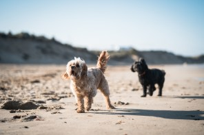 The-Norfolk-Dog-Photographer-0043