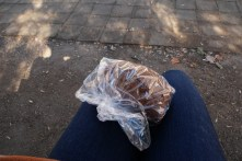 My nutritious picnic of pumpkin bread from the bakery.