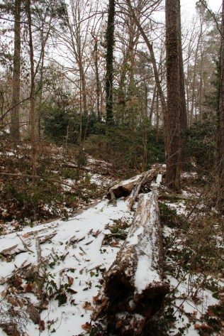 A much-thinned-out slice of our forest.