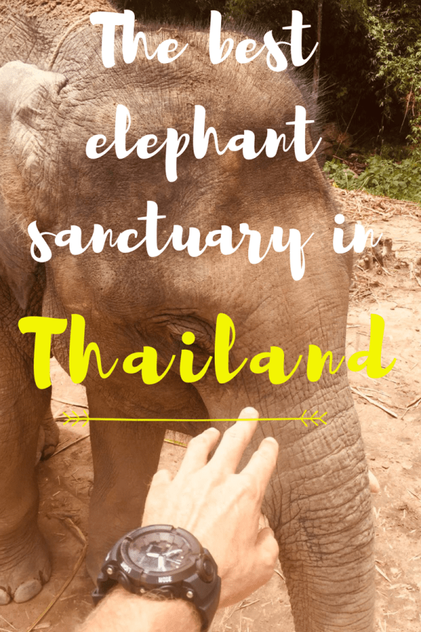 elephant sanctuary in Chiang mai – unbelievable experience