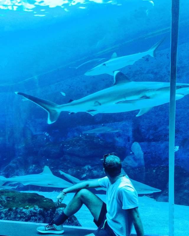 Singapore 3 day itinerary aquarium