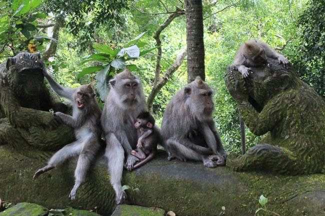 monkey forest bali, ubud bali monkey forest,monkey forest bali cost,ubud monkey forest bali ,sacred monkey forest bali ,bali ubud monkey forest ,monkey forest bali ubud,bali