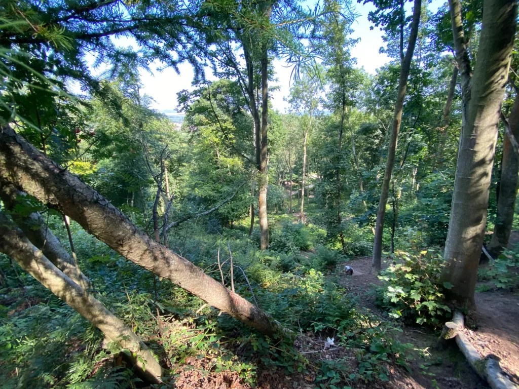 Woodland Guisbrough Woods