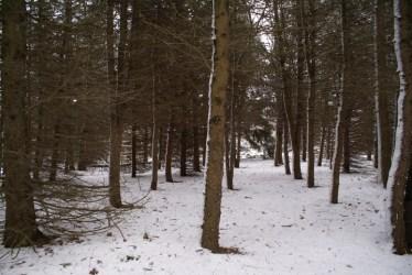 pines-2