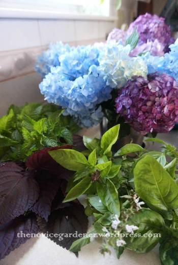 hydrangea and herb harvest