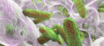 biofilm-nanobacteris