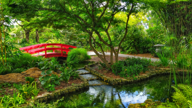 Photo of The New York Botanical Garden is Hosting Virtual Lectures