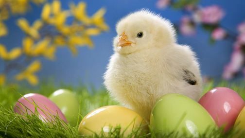 Easter_chick