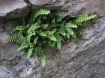 I loved this fern spilling out of a crack in the wall.
