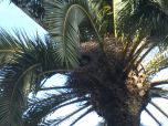 These parrots were flying around everyone. Their intricate nests are hidden between palm fronds.