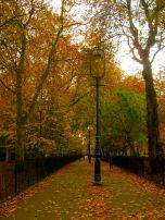 Autumn leaves in Highbury Fields