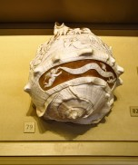 Incredible carved shell