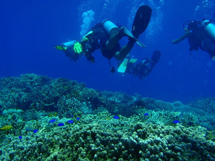 Cebu Moalboal Diving Underwater