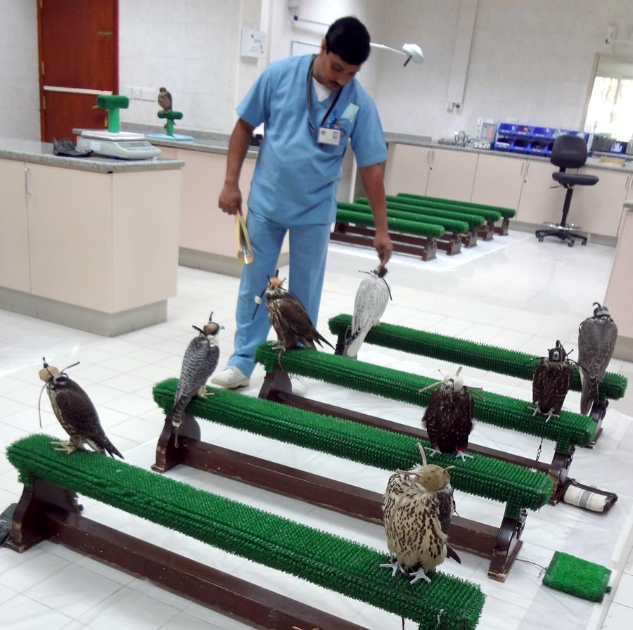 Abu Dhabi Falcon Hospital Clinic