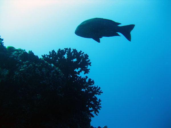 Maldives - Coral silhouette