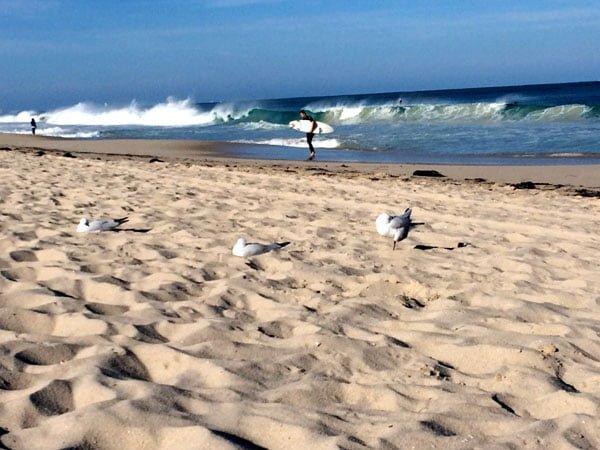 Perth Scarborough Rendezvous Beach Surf Birds