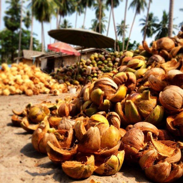Koh Samui - RNavigator Coconuts