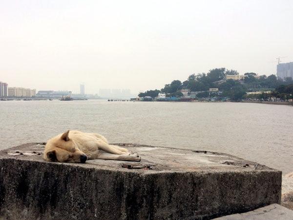 Macau Coloane Sea Sleeping Dog