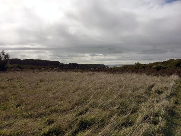 Gippsland Bear Gully Cottages Windswept Grass