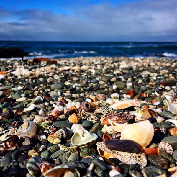 Gippsland Bear Gully Beach Shells
