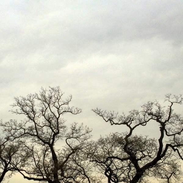 Seoul Changdeokgung Winter Trees