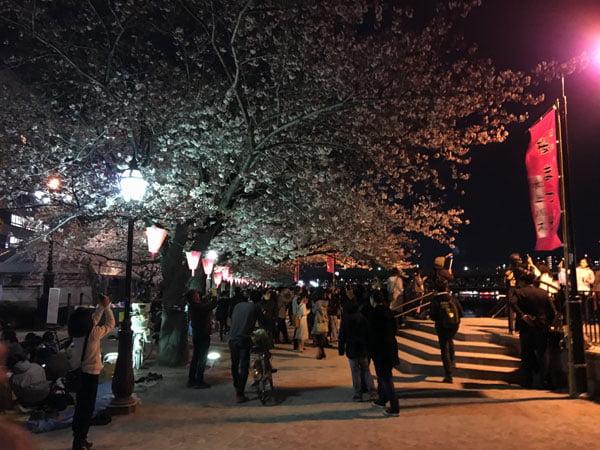 Tokyo Sumidagawa Sakura Night