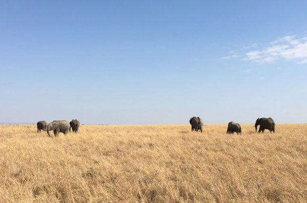 Kenya Maasai Mara Safari Elephant Herd