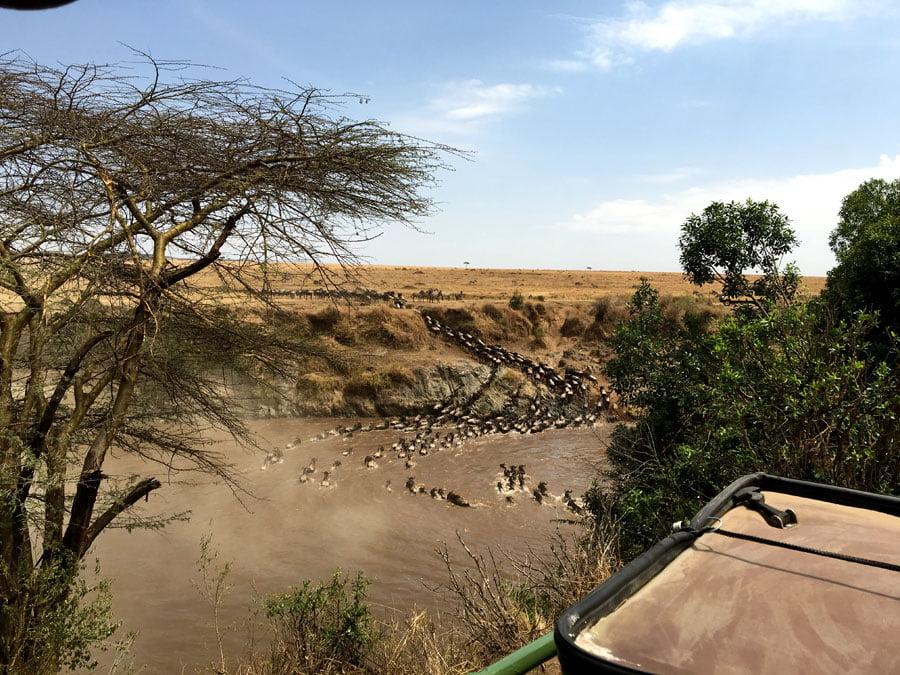 Kenya Maasai Mara Safari Migration Crossing