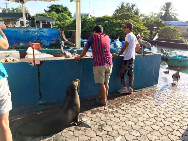 Galapagos Puerto Ayora Fish Market