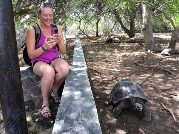 Galapagos Isabela Tortoise Breeding Centre Comparison