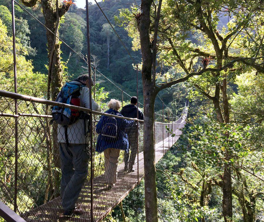 Panama Boquete Tree Trek Bridge