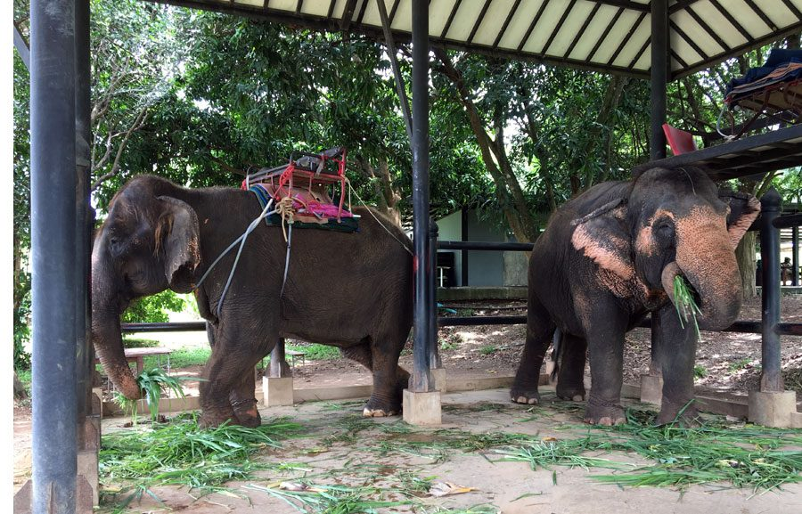 Hua Hin Monsoon Valley Elephants