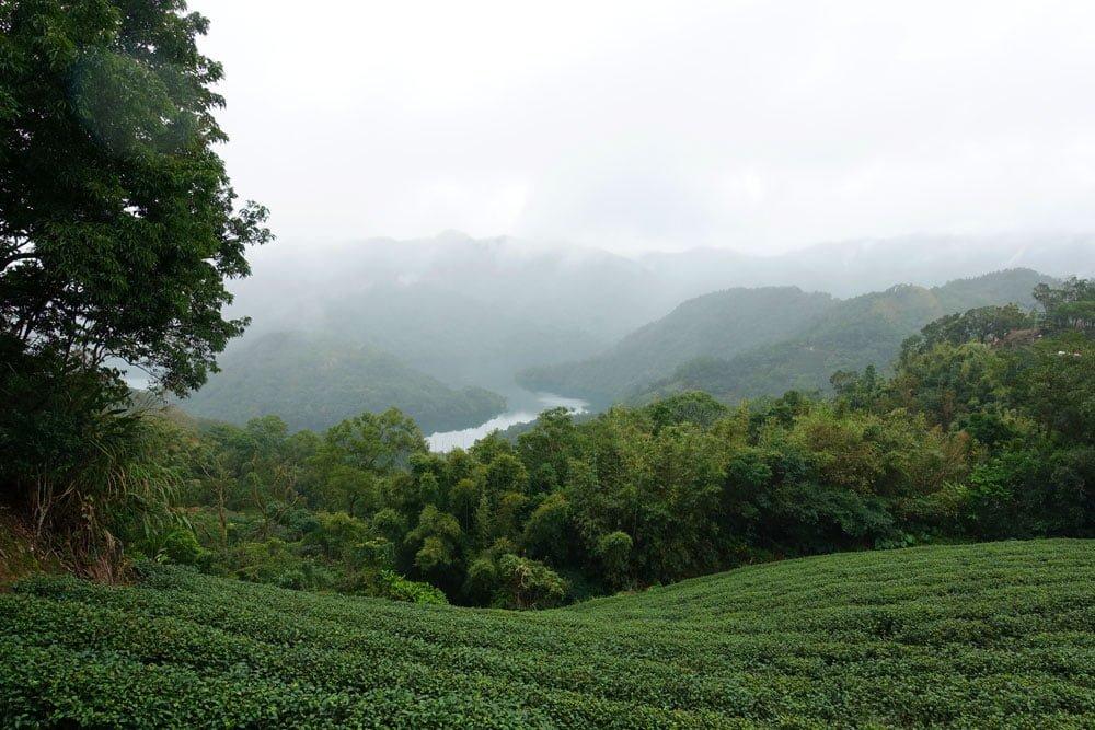 Shiding Thousand Island Lake Tea View