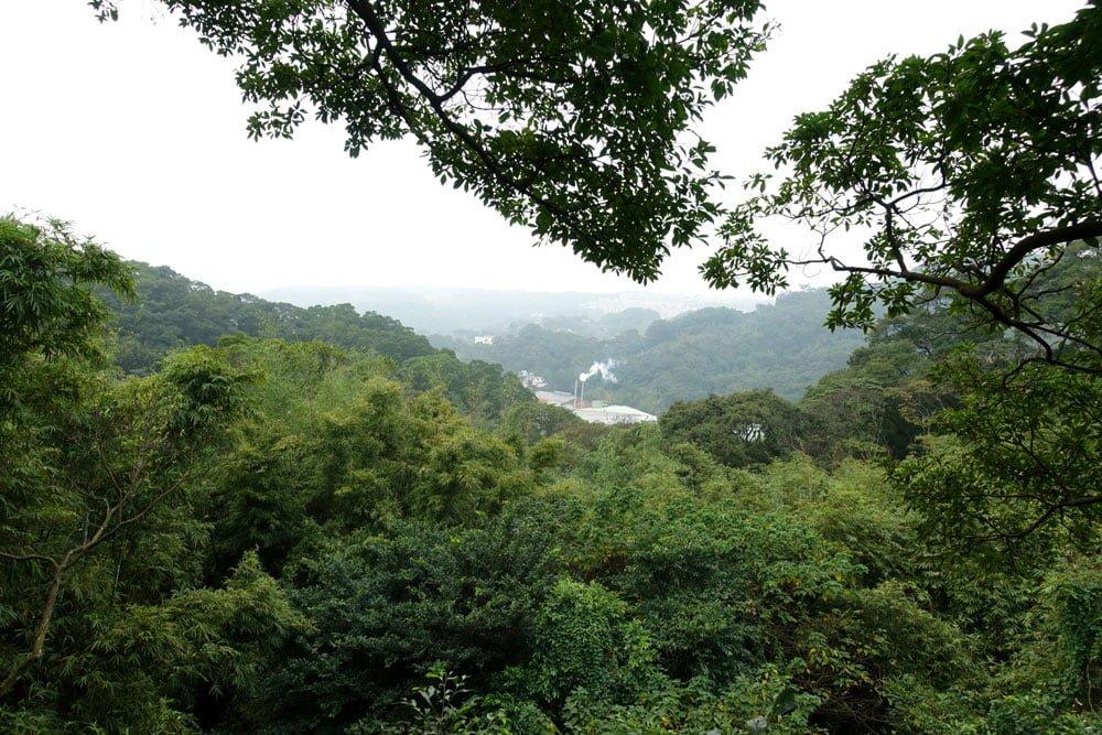 Taoyuan Tree Climbing View