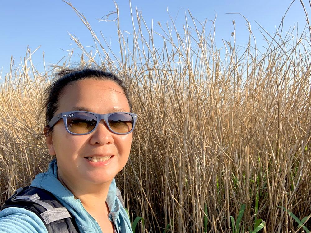 Suncheon Bay Wetland Reeds Me