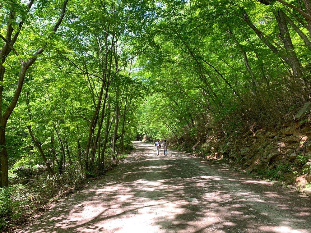 Suncheon Seonamsa Path Forest