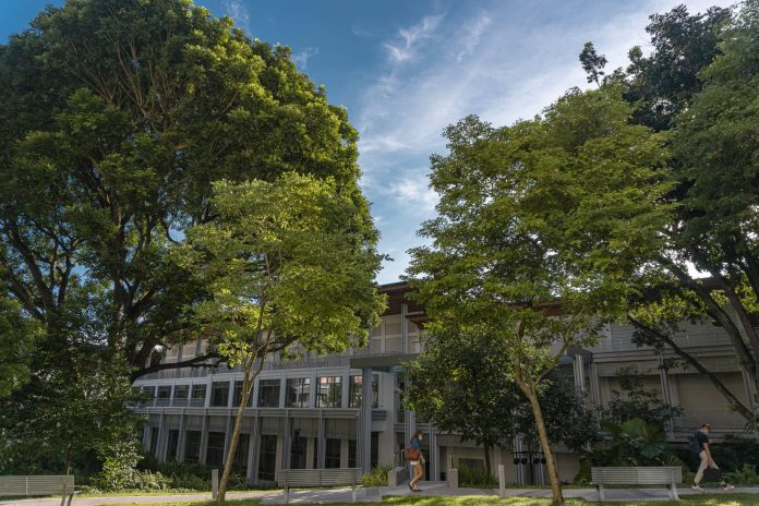 On a sunny day, a student walks past two trees in Yale-NUS College.