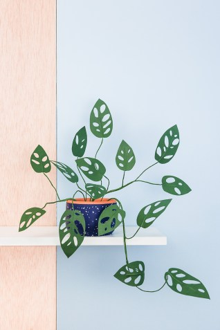 diy-monstera-obliqua-de-paple-9